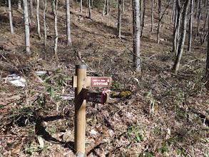 カラマツの森コース分岐