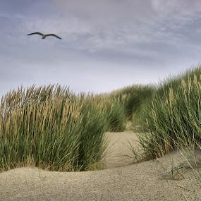 The Dunes - Impression by Justus Böttcher - Landscapes Travel ( zeeland )