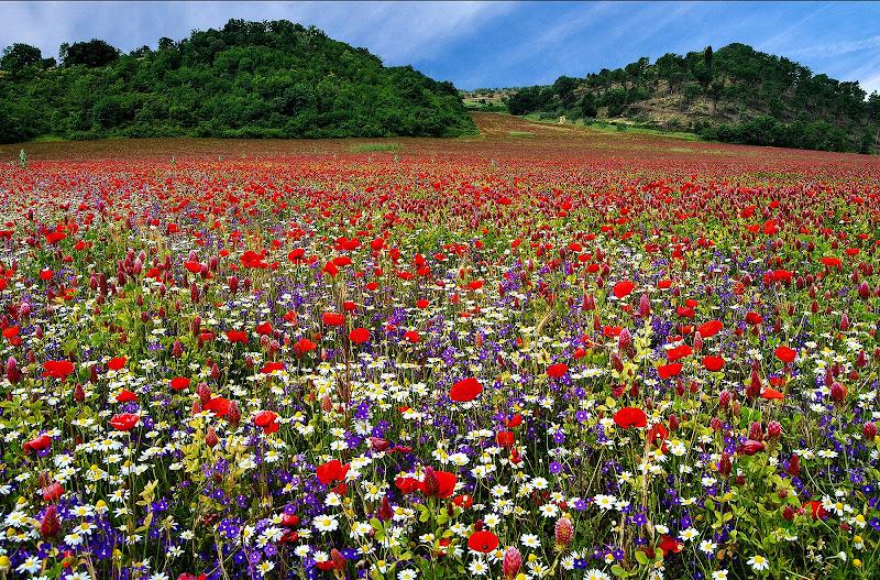 Valle dei fiori di Tacca