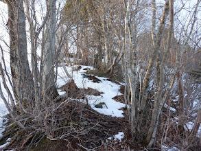 細尾根は雪が少ない