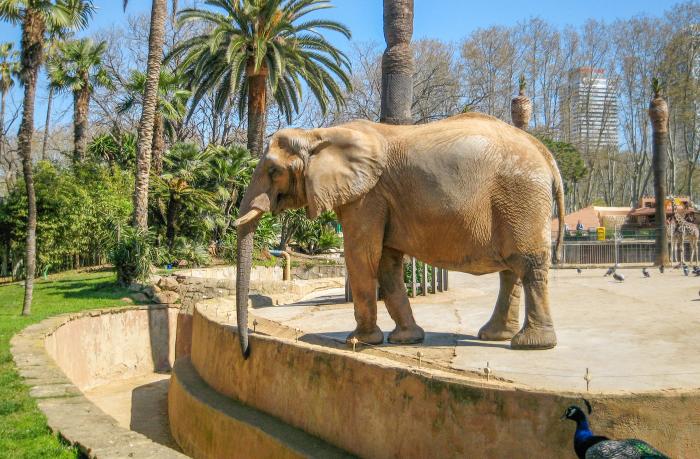 Foto Zoo Barcelona 19