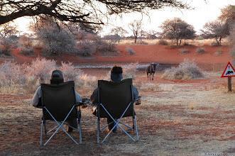 Photo: Haak en Steek Rest Camp, Mokala National Park. Blue Wildebeest in the back.