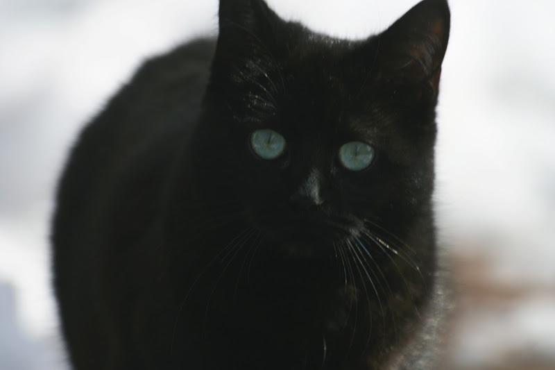 Black cat di Lucio gabrielli