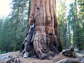 Photo: Orman yangınları doğanın normal sürecinde yer alırmış. Her ağacı da öldürmezmiş.