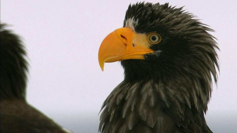 Watch Wild Russia: Earth's Last Great Wilderness live