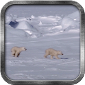Polar Bear Cubs Live Wallpaper icon