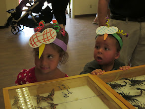 Photo: Insect days in the Botanical Gardens