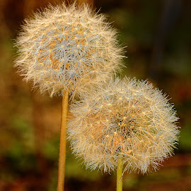 Double boule by Gérard CHATENET - Nature Up Close Other plants