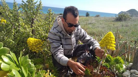 Del Pirineo al Desierto de Almería: nace la primera empresa de cactus online