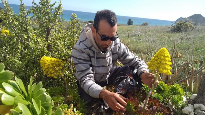 Isaac Sanabria con un cultivo de crasa en Cabo de Gata.