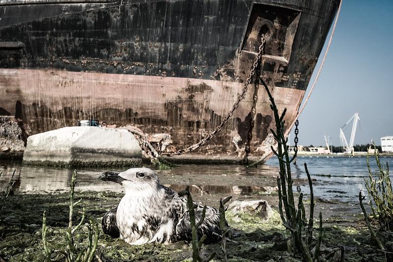 Insostenibilità ambientale di utente cancellato