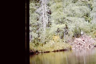 Photo: Beaver house in bay.