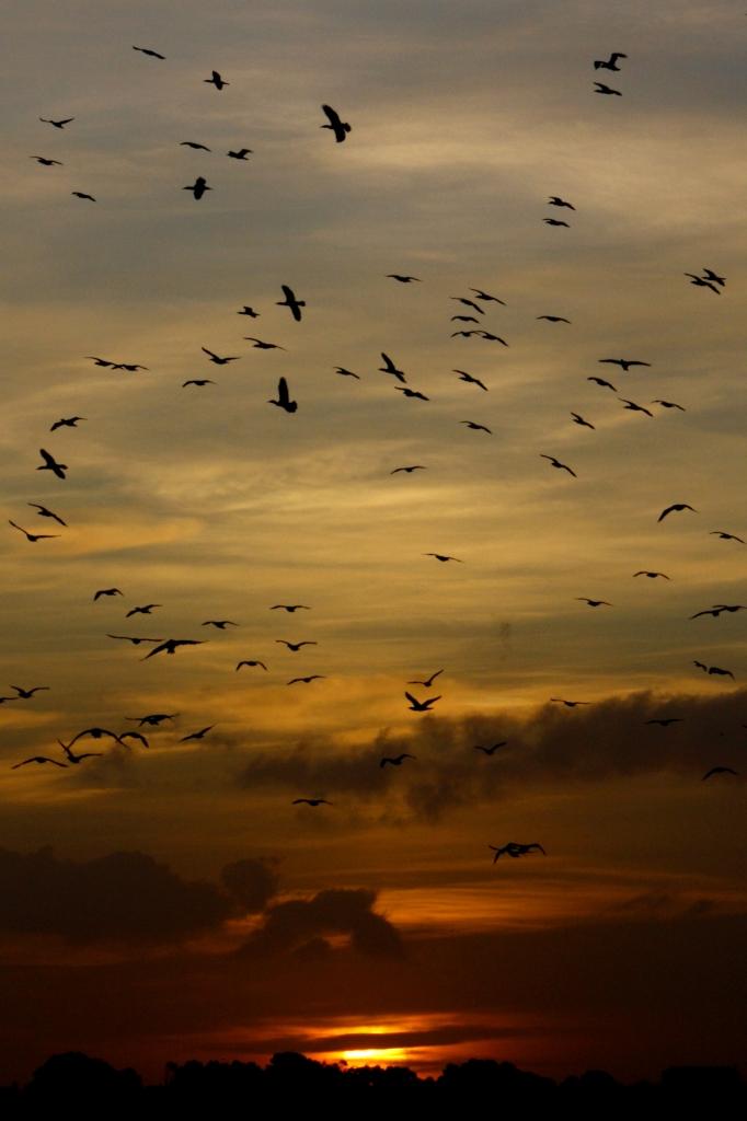 Uccelli, Gli di shrdn