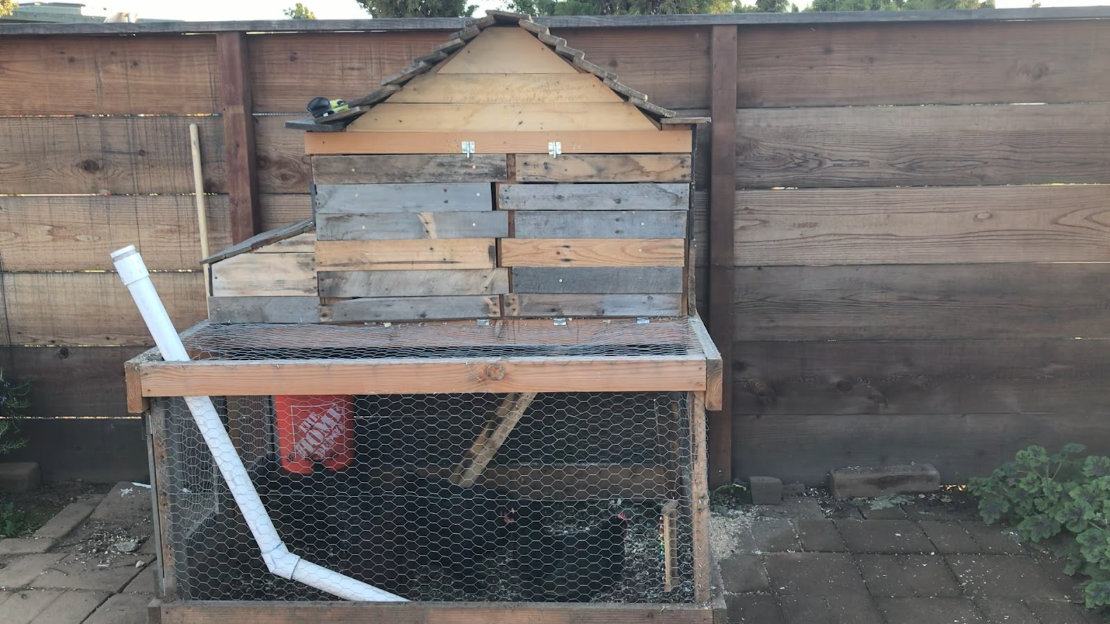 , Backyard Chickens