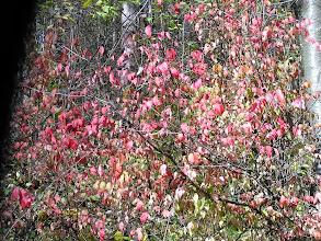 Photo: DA190381 Dolina Kobylanska - jesien