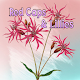 Red Caps And Lillies Download for PC Windows 10/8/7
