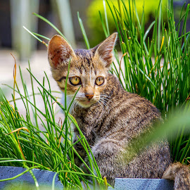 Kiity by Kriswanto Ginting's - Animals - Cats Kittens (  )