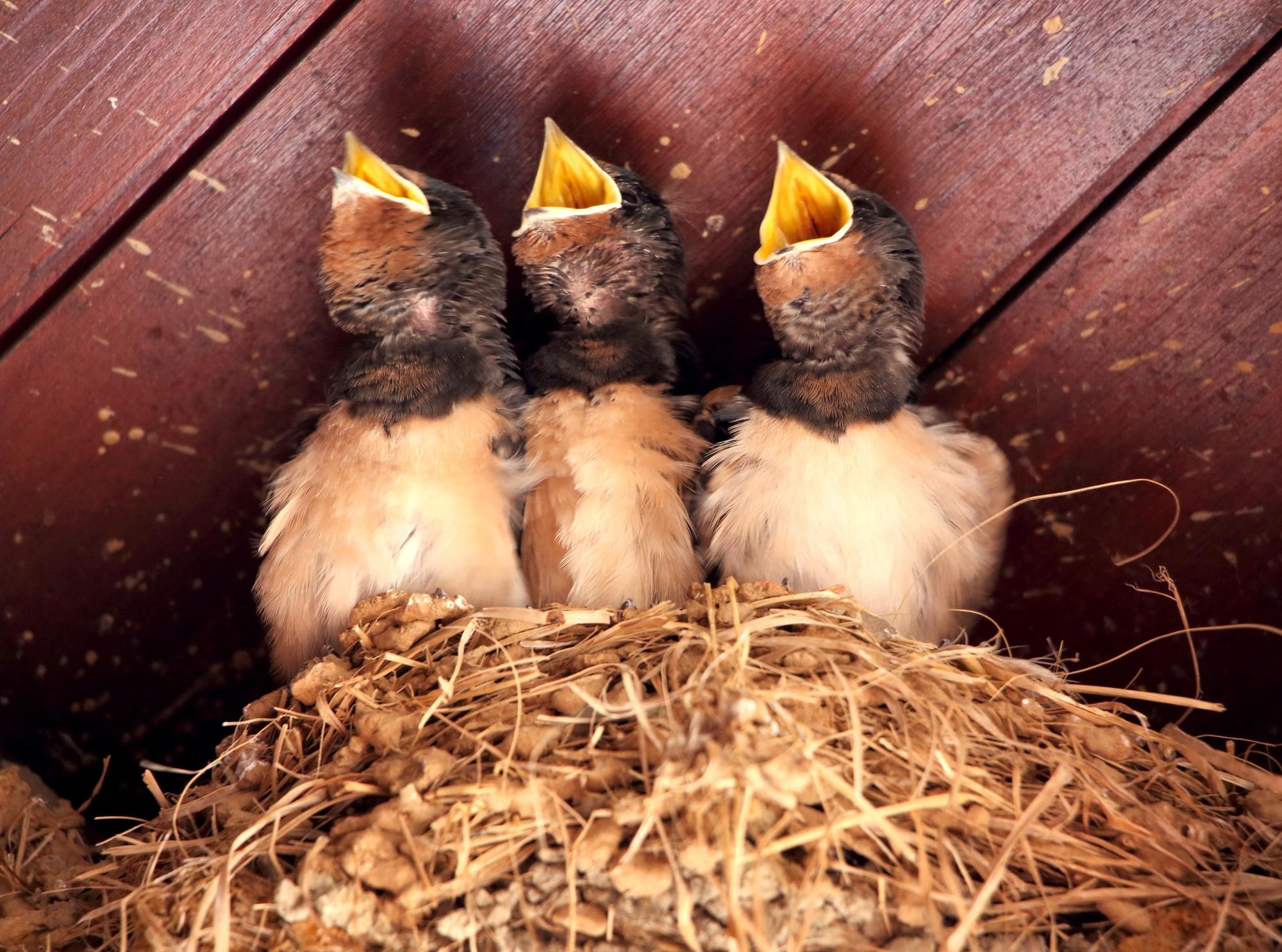 Una rondine non fa primavera, ma tre si.  di letiziacaprettiphotography