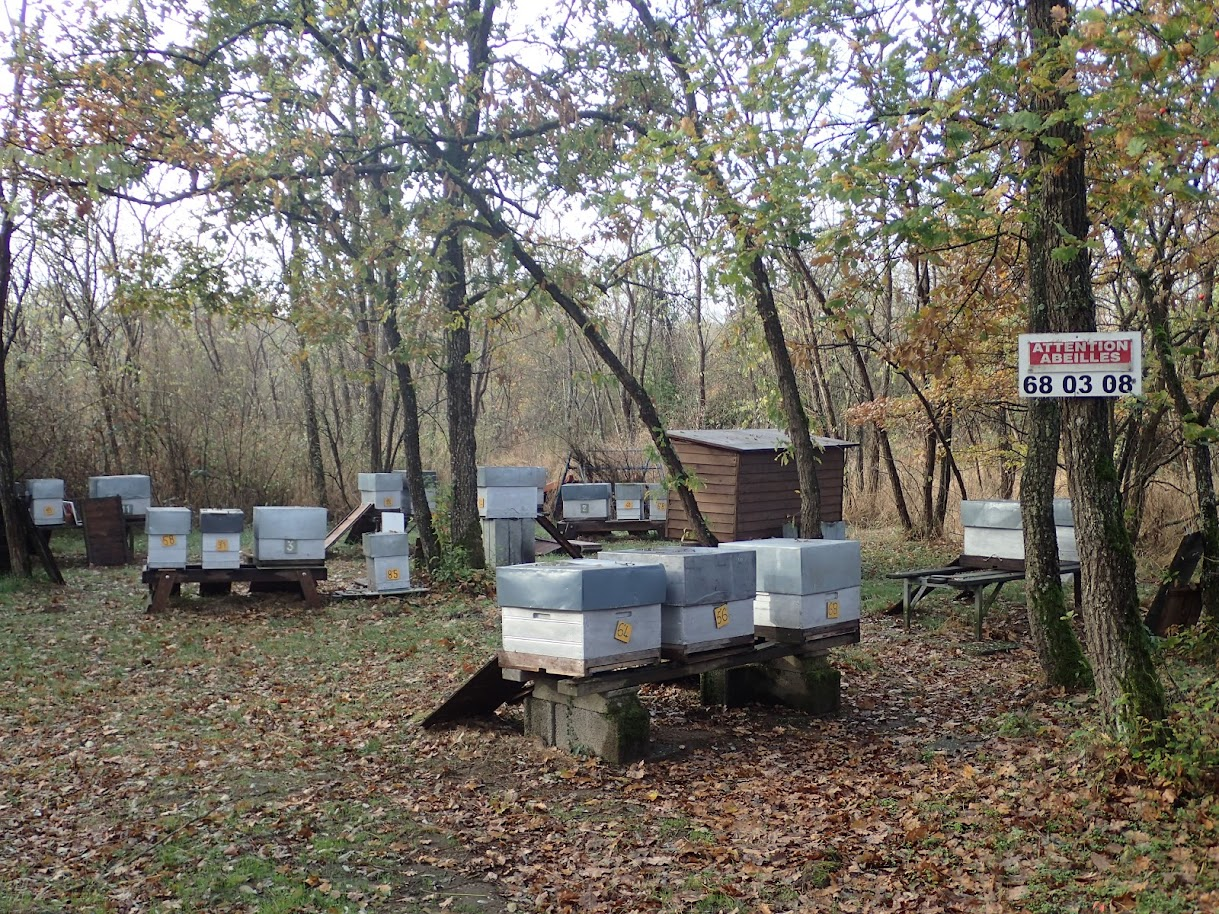 Hameau pour abeilles