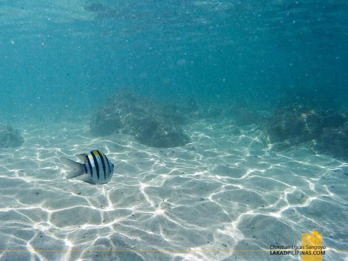 Patar White Beach Snorkeling