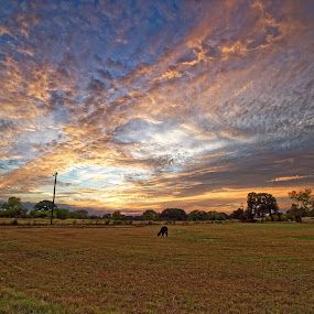 This sunset has my friend Jack on the left and that is C'meredammit standing in the pasture. Edgewood Texas. Feel free to share.Sony A7RII with Zeiss 16-35 f/4. by Ricky Niell - Uncategorized All Uncategorized (  )