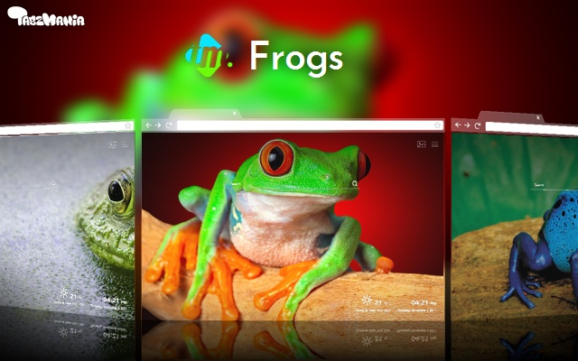 Colorful Frogs Wallpapers UHD backgrounds
