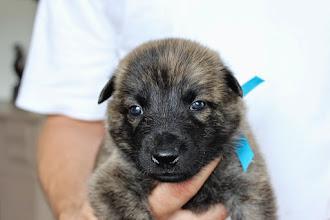 Photo: teefje donkerblauw (3 weken oud)