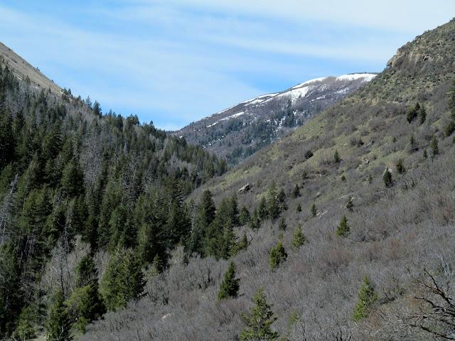 View up Ford Creek toward Ford Ridge