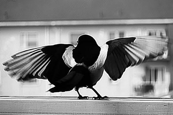 Spiccando il volo .... di Massimo Tiozzo