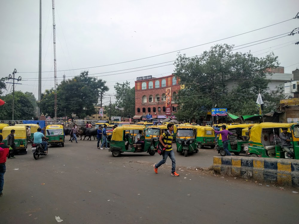 Traffic in Agra—yes, those are cows in the middle of everything