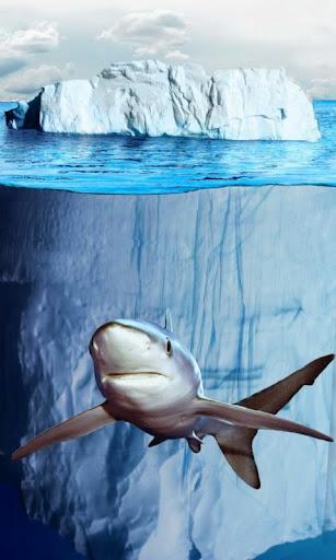 可爱的鲨鱼失去了kě'ài de shāyú shīqùle