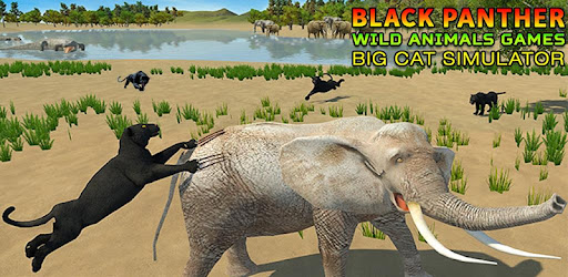 Image of: Cougar Shutterstock Ultimate Black Panther Animal Safari Survival Game Apps On Google Play