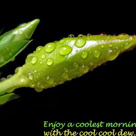 Enjoy.. by Asif Bora - Typography Quotes & Sentences