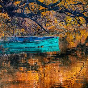 Wetlands by Pravine Chester - Landscapes Waterscapes ( waterscape, india, marshy wetland, landscape, photography )