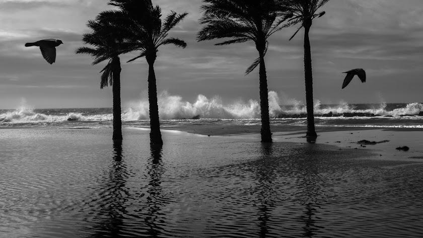 Imagen de archivo de un día de viento y fuerte oleaje en la capital.