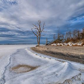 Frozen Bay and the Tree by Carol Ward - Landscapes Waterscapes ( frozen beach, winter, lone tree, tree, waterscape, snow, maryland, berlin, frozen, assateague island national seashore, landscape, assateague )