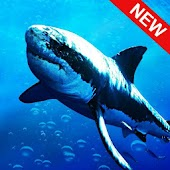 Blue Whale Shark Game 3D