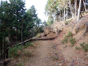 峠まで林道を進む