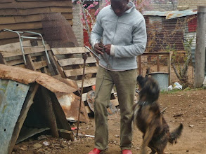 Photo: Collecting dogs from their owners for sterilisation