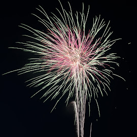 FireFlower by Narendra Sharma - Digital Art Abstract ( fireworks, photography, digital art, night photography )
