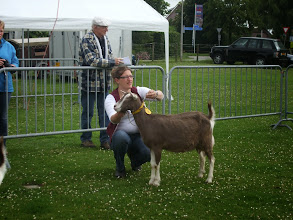 Photo: Klasse 1: 1 jarige toggenburger geiten.   1b. Sarie's Gemmeke 'JH'
