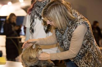 Photo: Малыш Премьерка и эксперт по всем породам из Эстонии Ольга Комиссарова.. эксперты выбирают Лучшего пдш котенка
