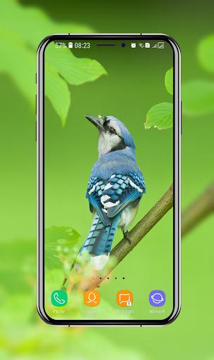 Download Birds Wallpaper Free For Android Birds Wallpaper Apk Download Steprimo Com