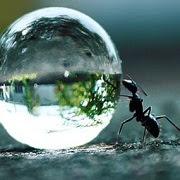 Примета муравьи