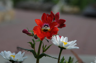 Photo: Flower in Fairbanks park
