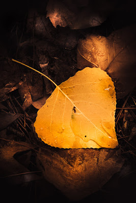 un cuore d'autunno di Alessi Girlando