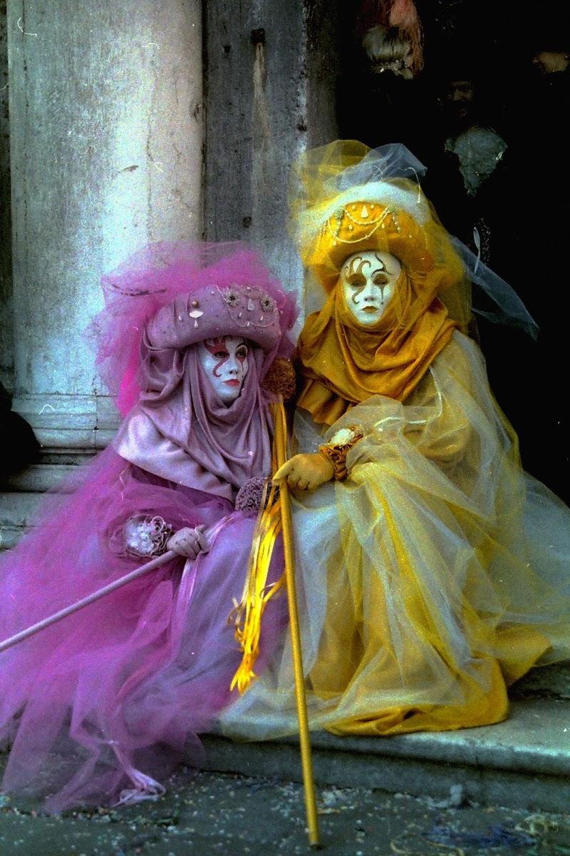 Viola e Giallo di Gianni.Saiani  Photos