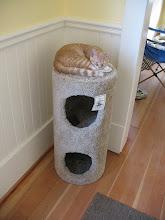 Photo: Derek, king of the cat tree.