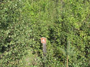 Photo: Waarbij ik me afvroeg waar de mountain bikers zich hier moesten begeven. Ver zullen ze in ieder geval niet geraken. :-) (Uiteraard is er voldoende ruimte elders maar dit pad heeft men dus een beetje laten onderkomen, een beetje veel zelfs)