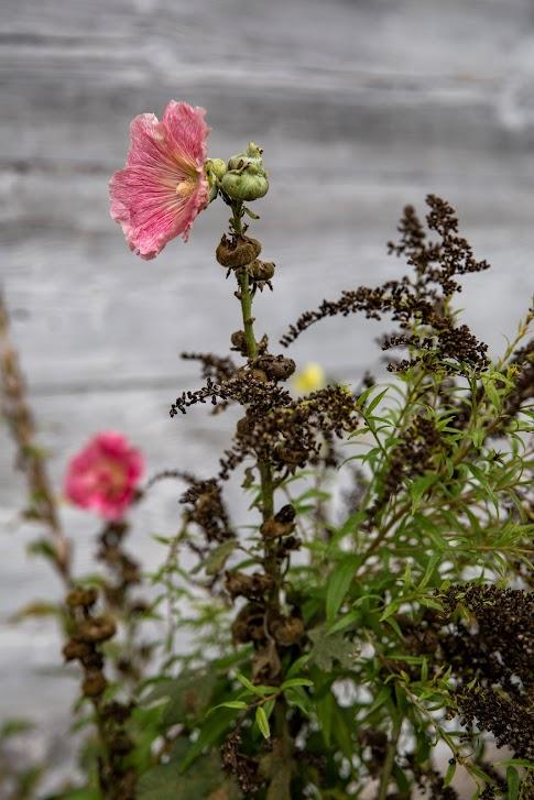 kwiaty, weekend na Mazowszu